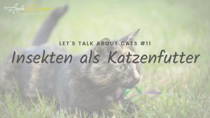 Bild für Blogbeitrag - Insektenfutter für Katzen