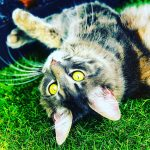 Blogbeitrag Katze schläft viel