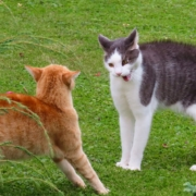 BARF Katzen kämpfen