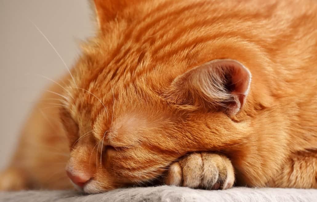 Für Blogartikel Hautausschlag bei Katzen