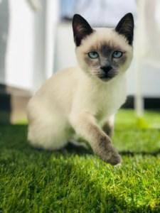 Blogbeitrag Katze erbricht