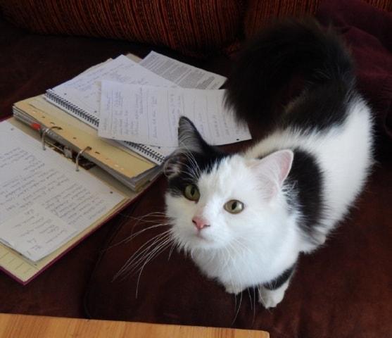 Katze sitzt auf dem Sofa mit BARF Unterlagen
