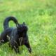 Gesunde BARF Katze steht im Gras