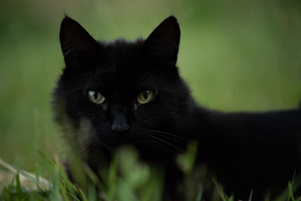 BARF Katze Mounty im Gras