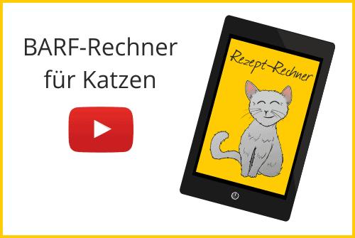 Barf Rechner für Katzen Bild mit Katze und Text Rezept Rechner