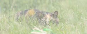 BARF Katze im Gras