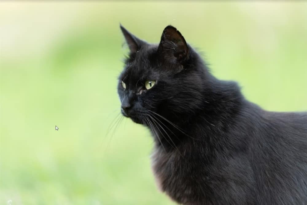 gesunde BARF Katze im Grünen
