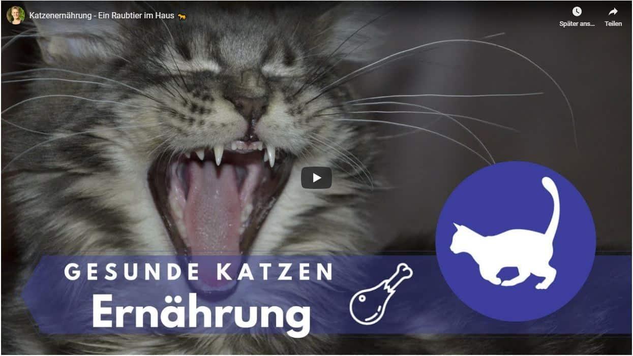Ernährungsberatung für Katze - Bild mit YouTube Link